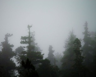 Fogbound Giants