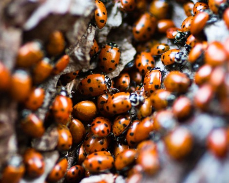 Ladybird Photo: Maxwell Odland