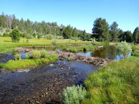 A  Healthy Beaver Pond