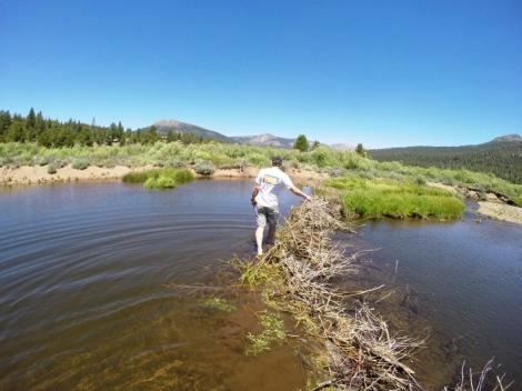 Measuring the Beaver Dam